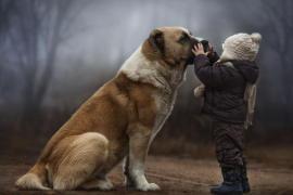 Imaju li životinje isceliteljski uticaj na nas?
