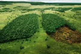Drveće zahvaljujući kojem dišemo