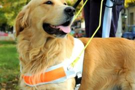 Psi, vodiči slepih i slabovidih osoba