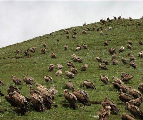 """""""Nebeska sahrana"""" na Tibetu"""