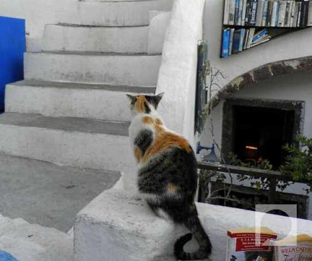 Mačke u Grčkoj