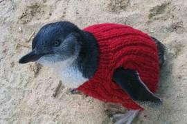 Mali pingvini u džemperima koje je ispleo 109-godišnjak