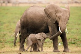 Nezaposlenost razdražuje i – slonove
