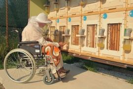 Pčelarstvo: 50.000 evra za ideju za starije i slabo pokretne pčelare
