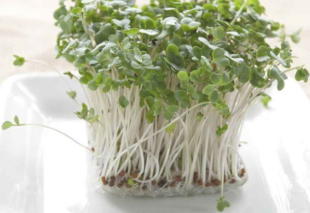 Izdanci brokolija – nov način borbe protiv raka?