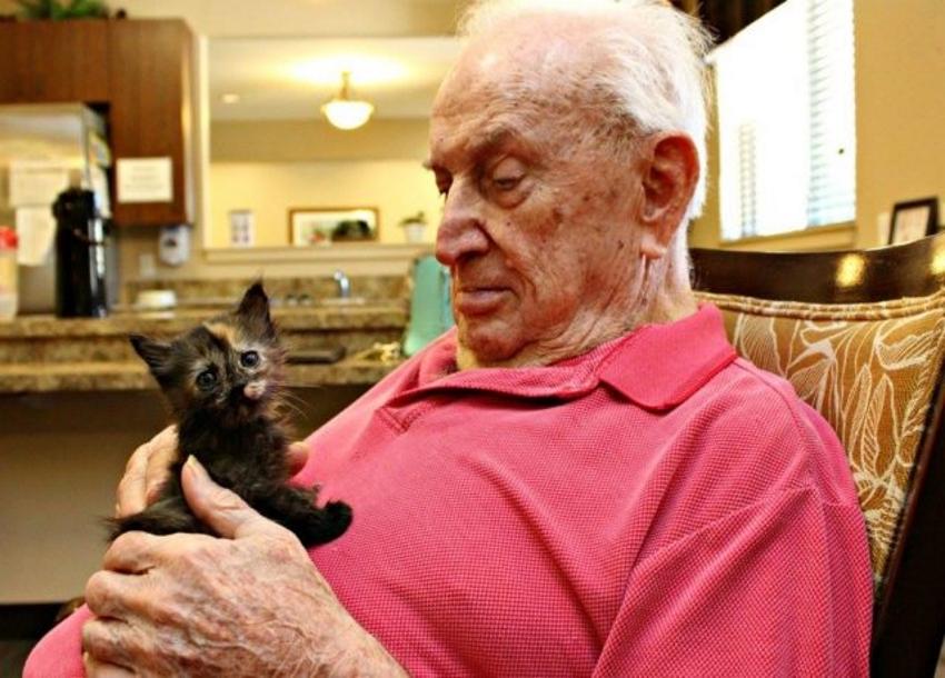 Azil za životinje udomljava najmlađe mace u domu za stare (FOTO galerija)
