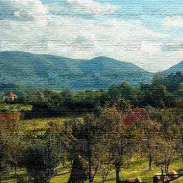 Miloje (Beograd): Prvo putovanje u beli svet