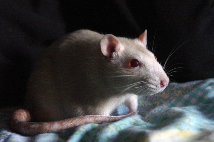 Kako životinje mogu da pomognu kod lečenja Alchajmera