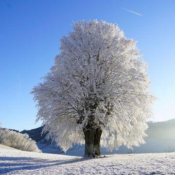 Ljubica (Zemun): Decembarskog snežnog jutra